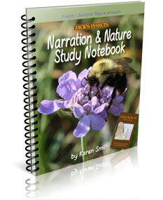 jacks insects notebook